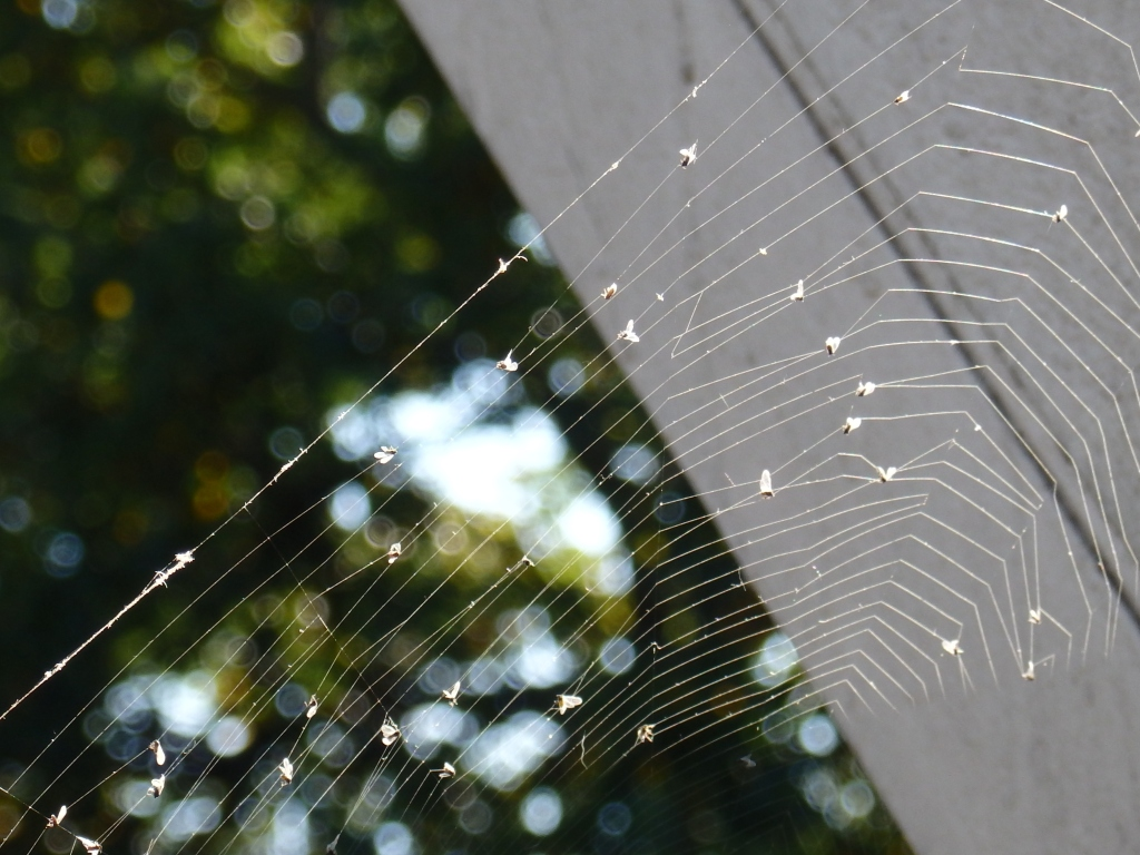 bridge web