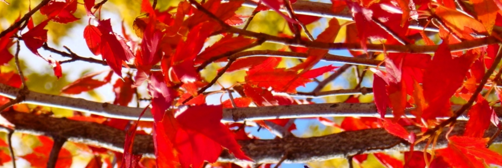 contrasted fall