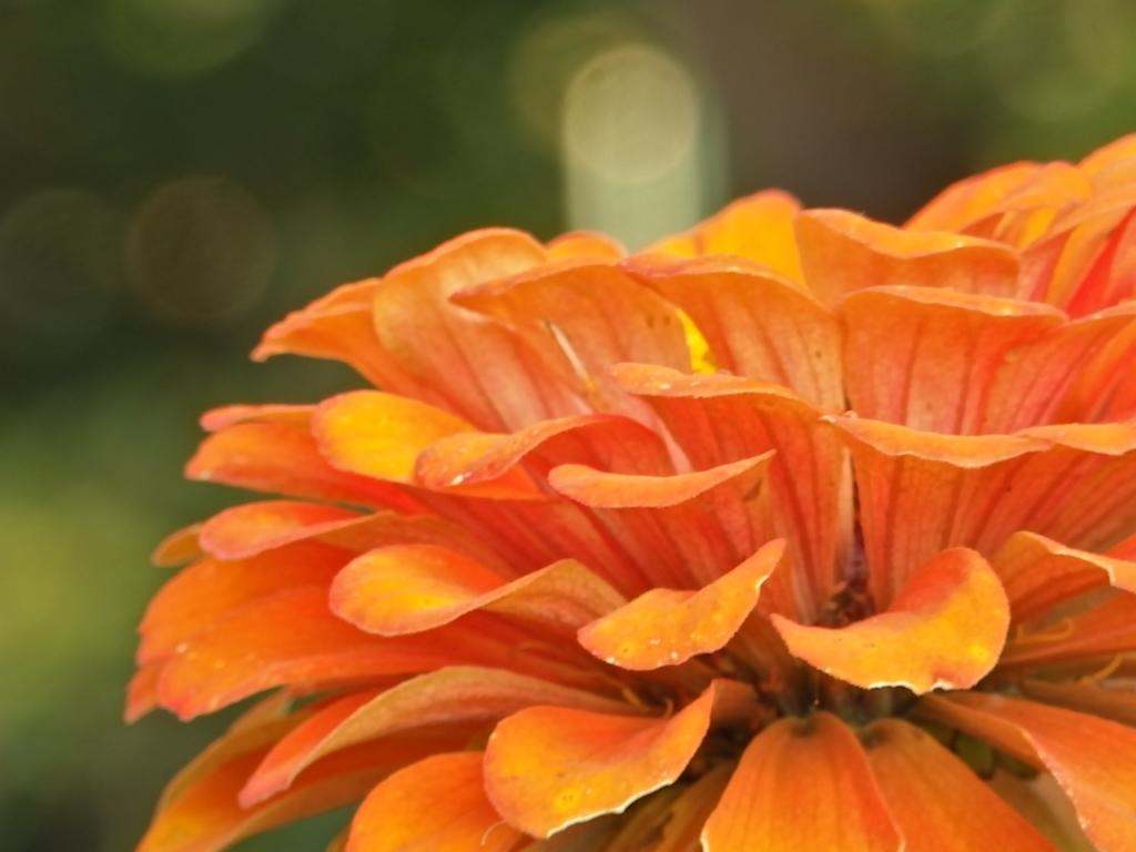 dazzled orange