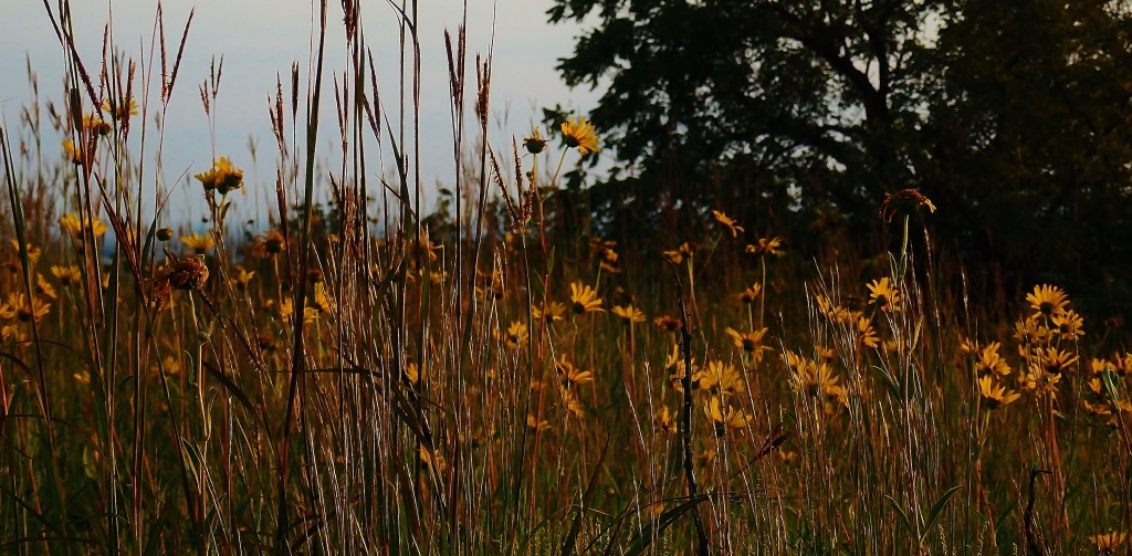 wild grass and sunflowers