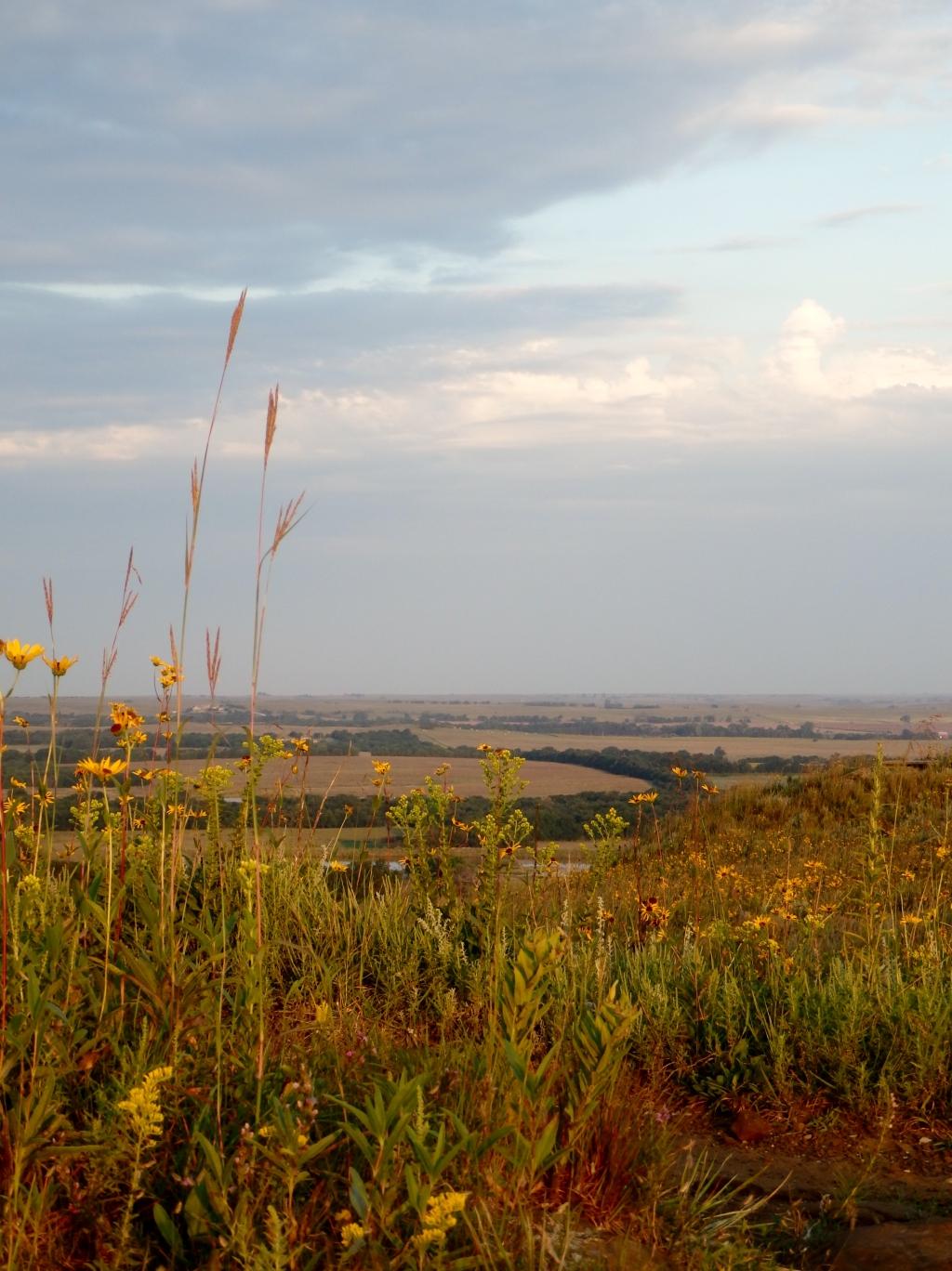 wild grass view