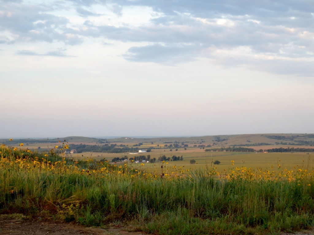 sunflower scenic view