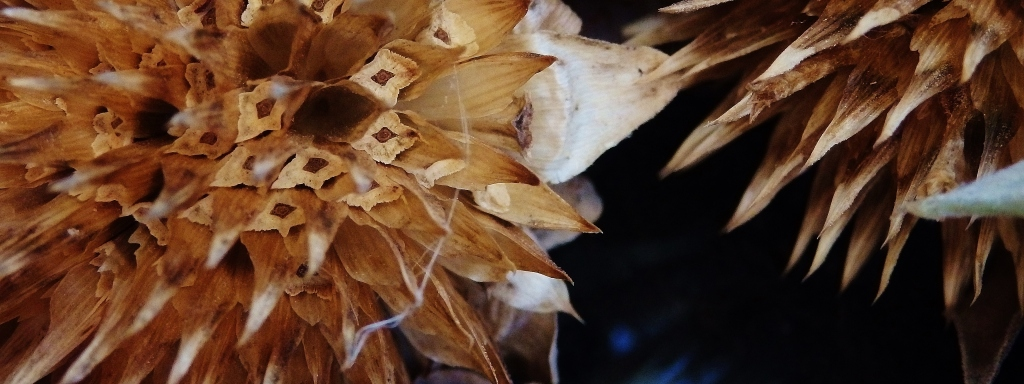 sunflower seed detail