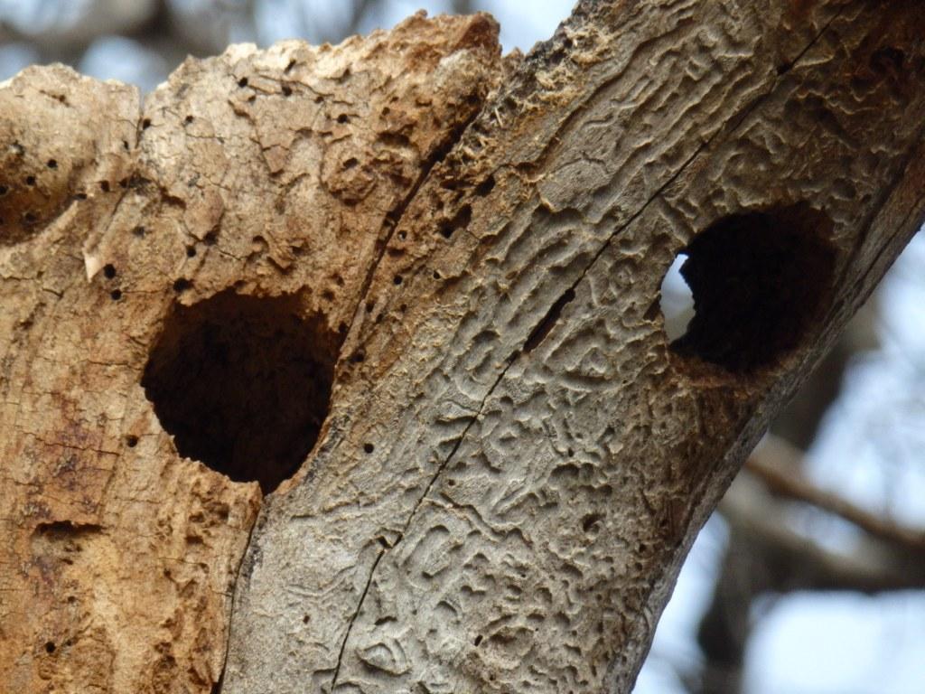 tree rot detail