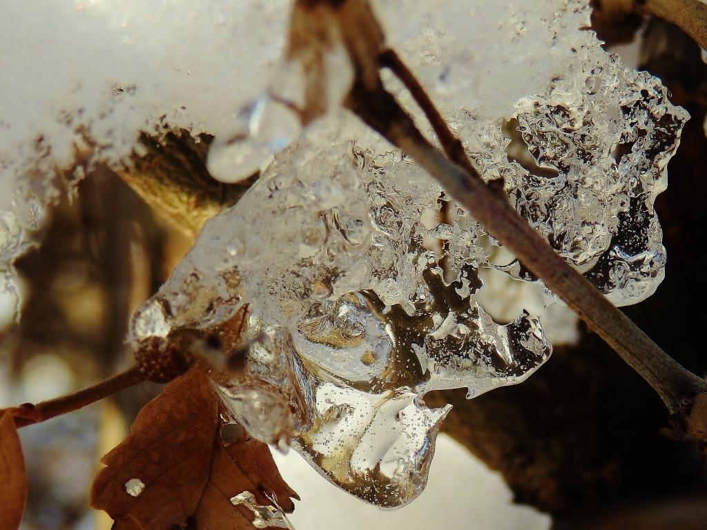 ice on twig