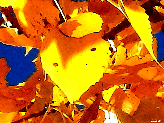 one leaf abstract