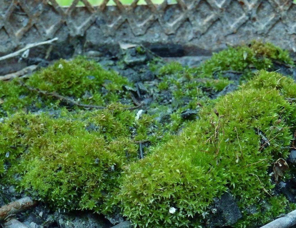 firepit moss