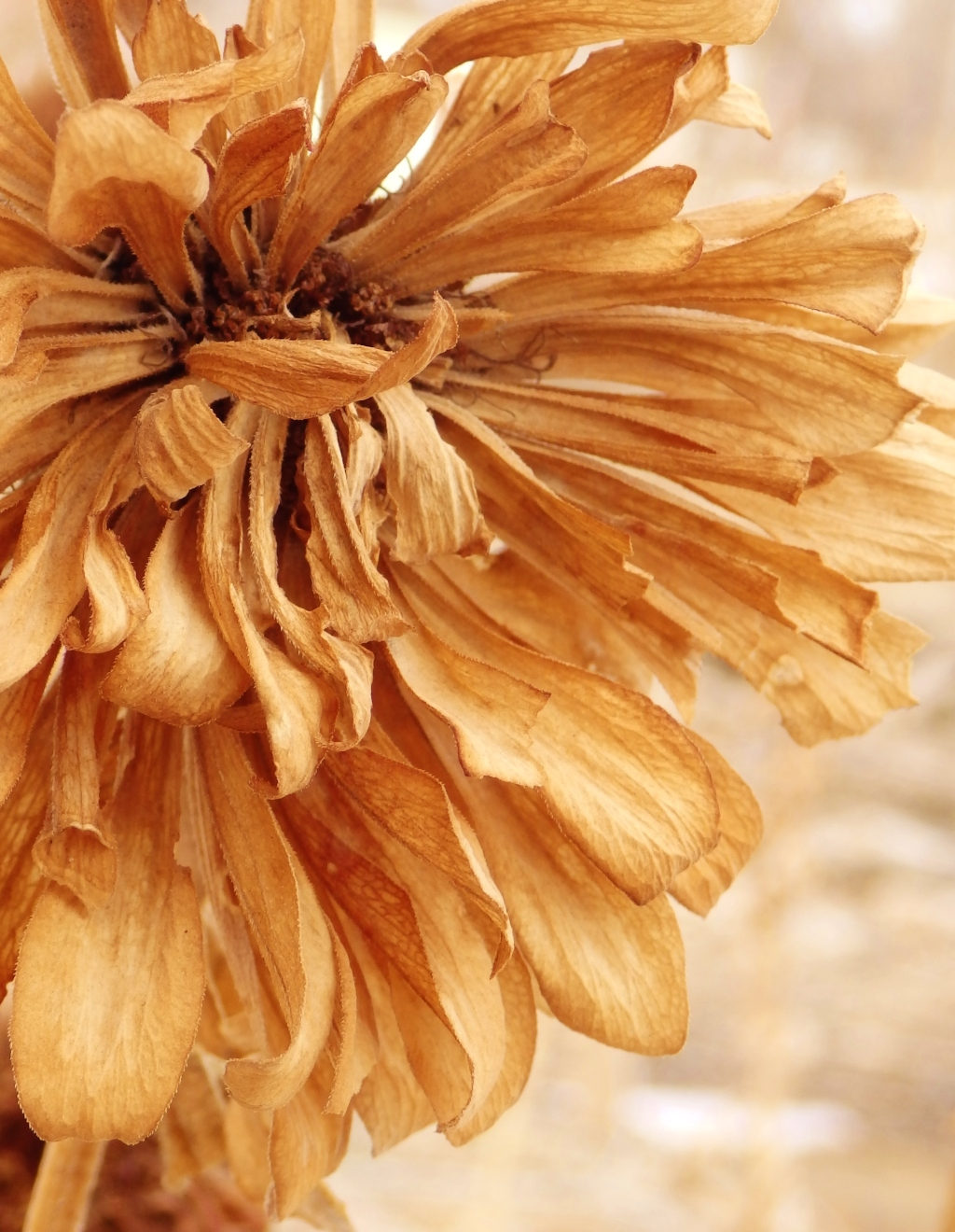 paper zinnia
