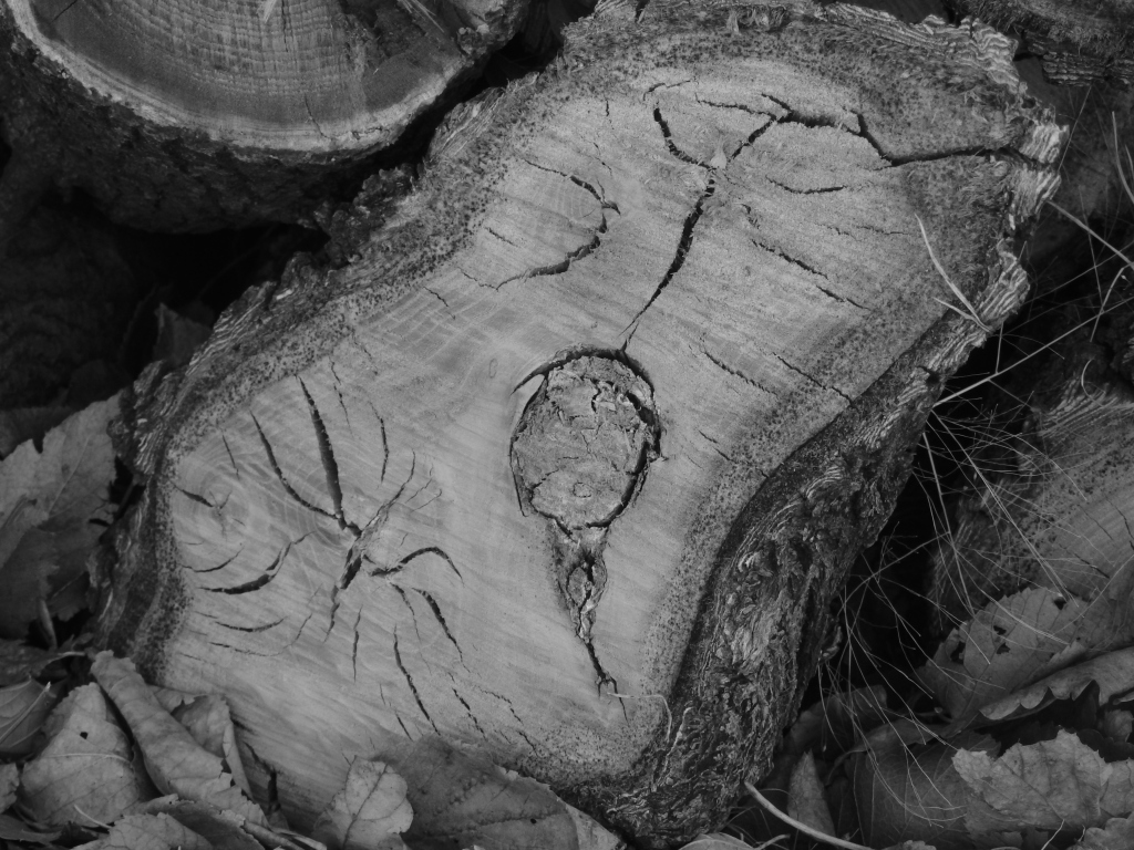 womb of wood