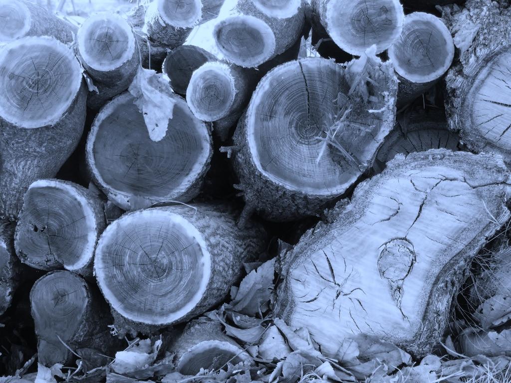 woodpiled