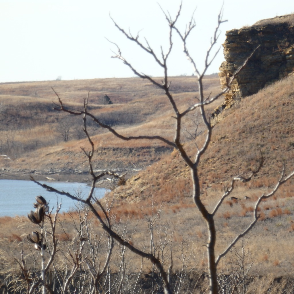 bare limb bluff and water