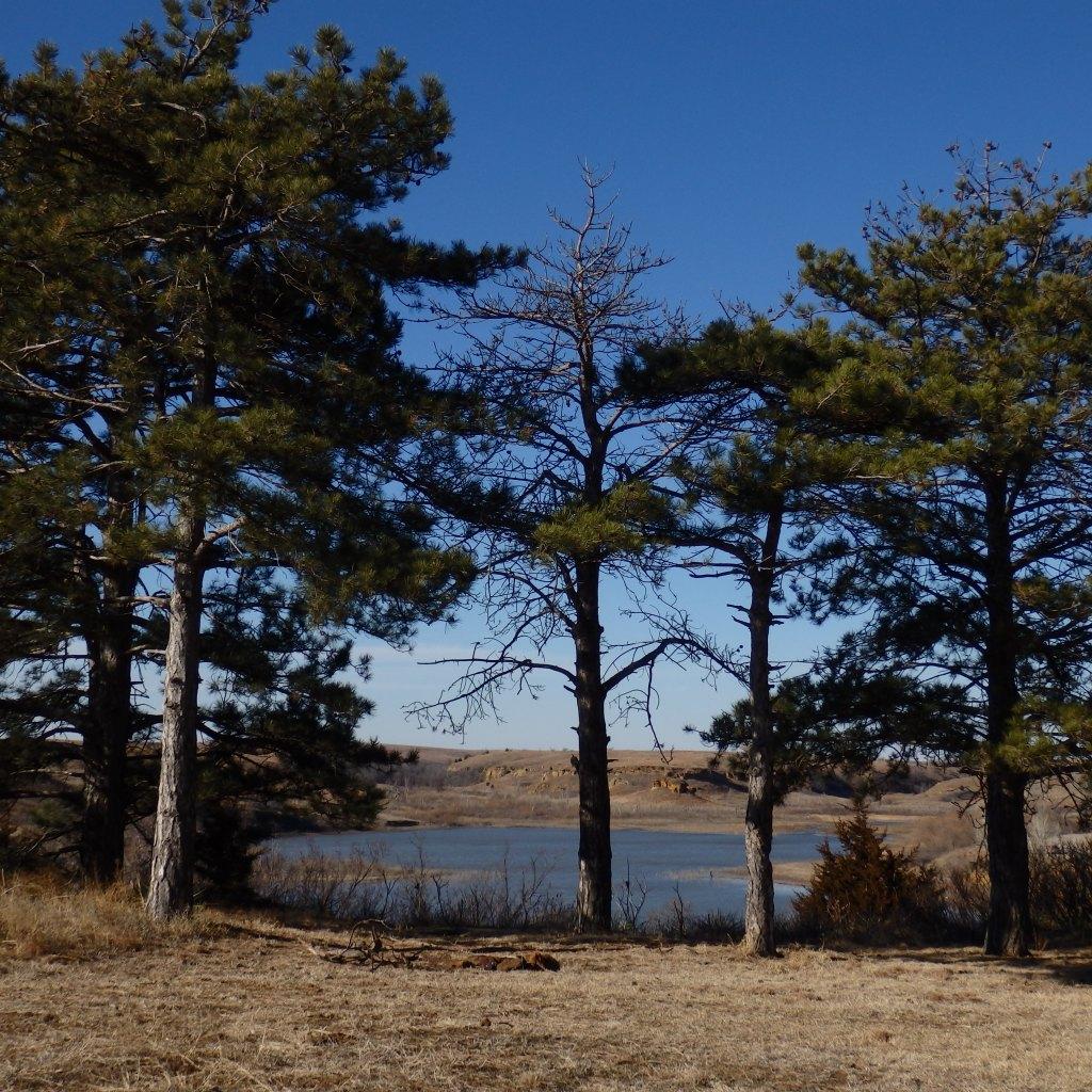 lake thru the trees