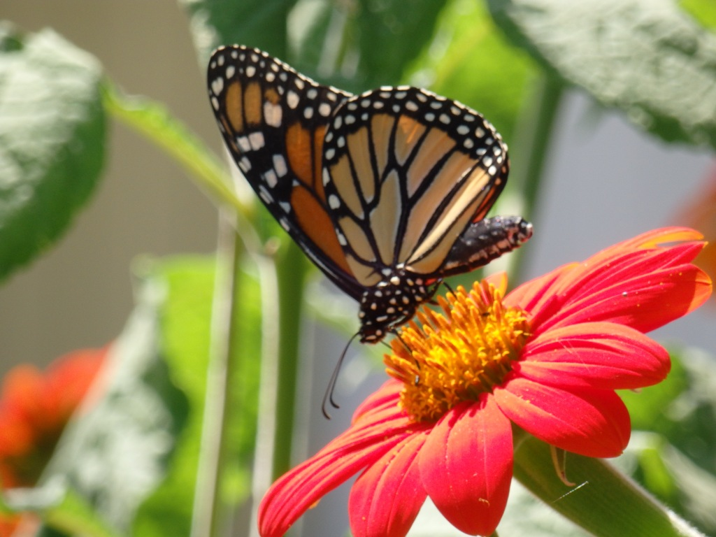 monarch work