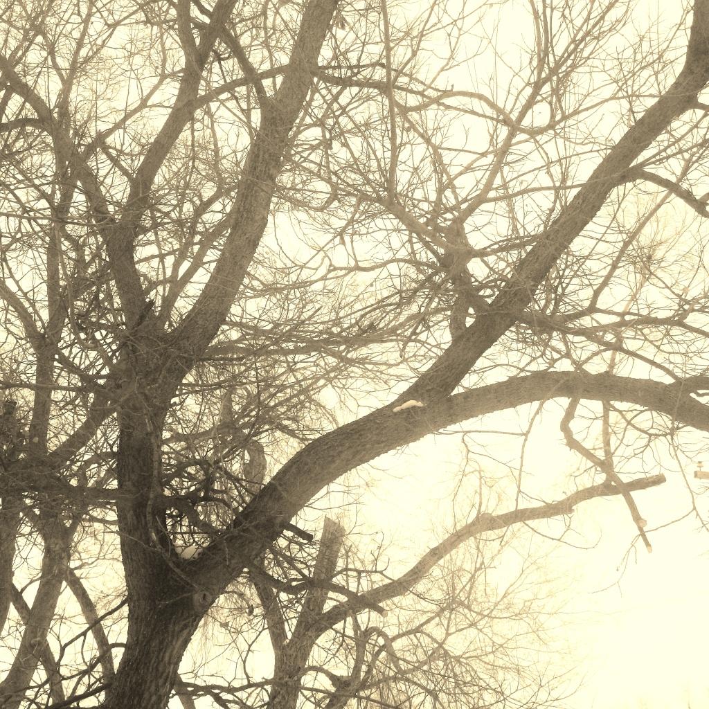 tree echo 3