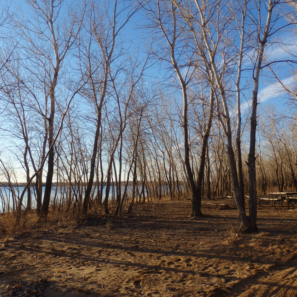 tree lake shadows