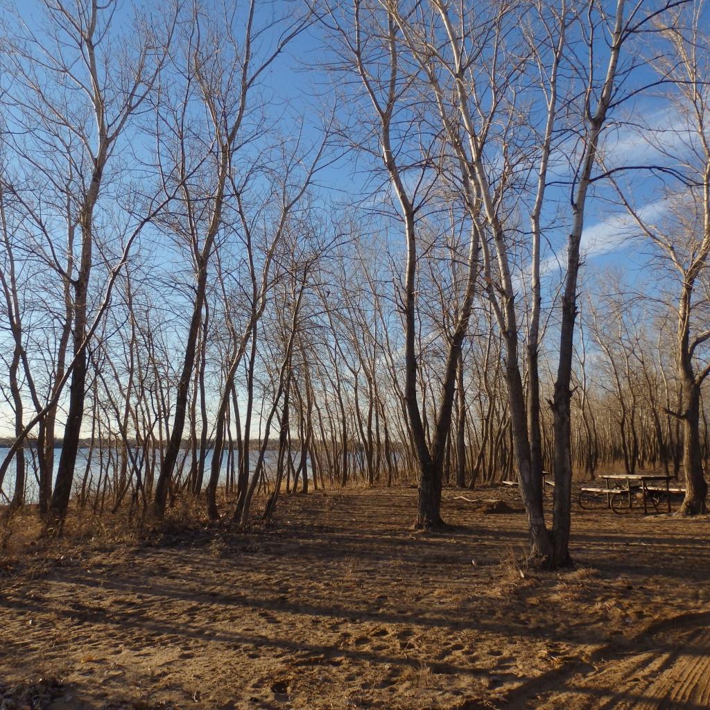 treed lake