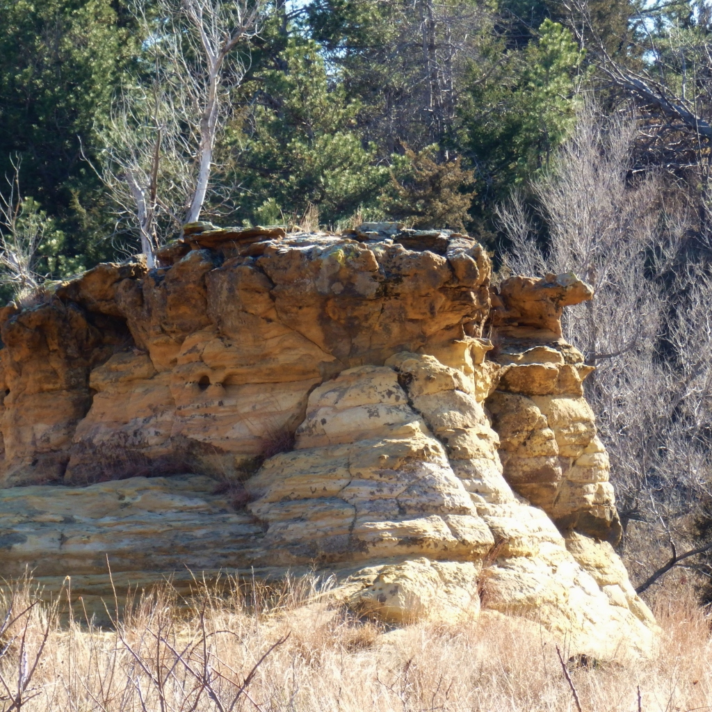 trees and rock formation