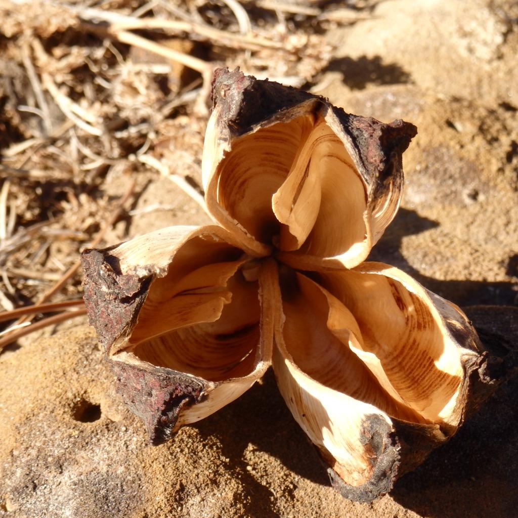 yucca rock