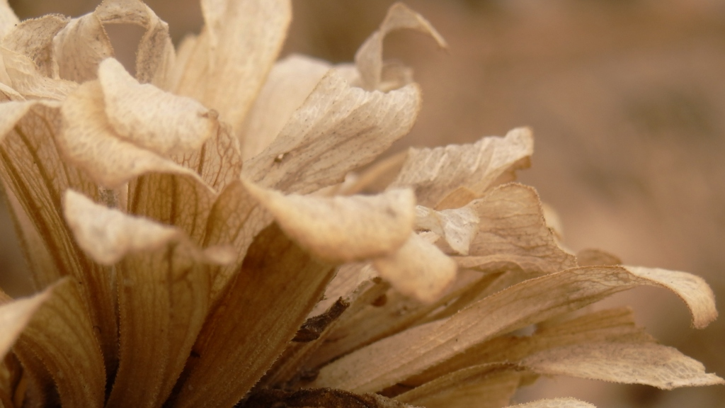 paper zinnia 2