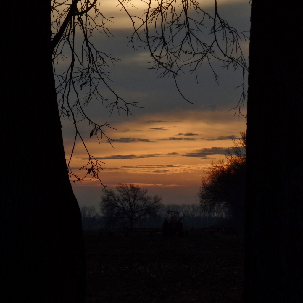 sunrise tree frame