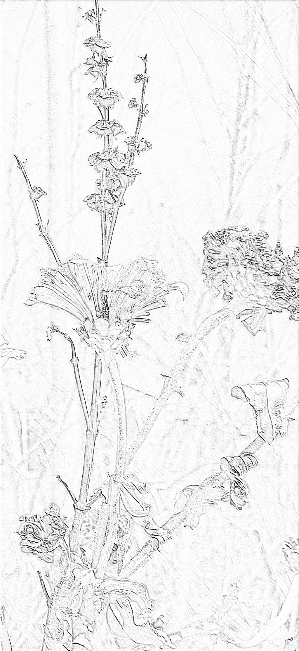 freeze dried garden sketch