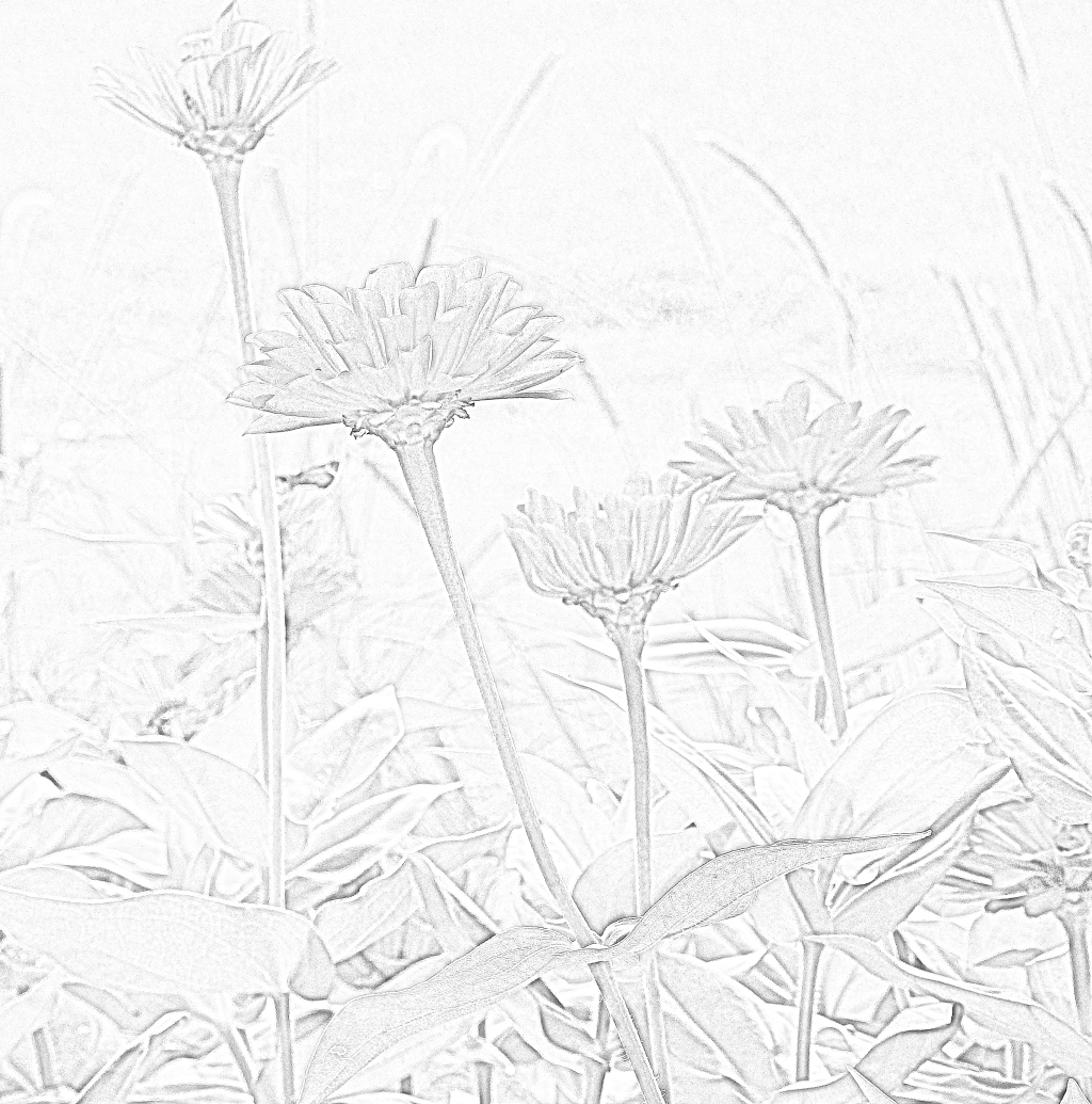 multi zinnias sketch