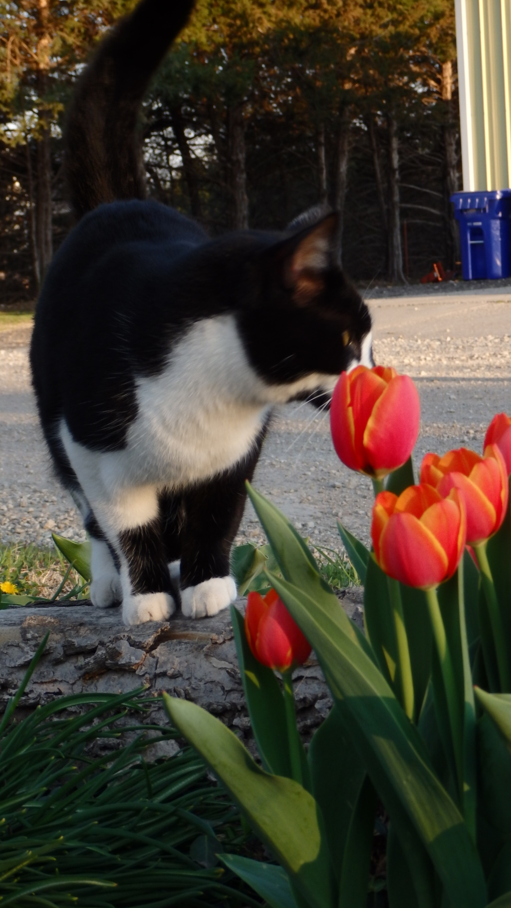 time to smell the tulips 3