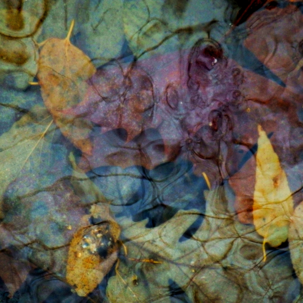 water and leaf abstracted