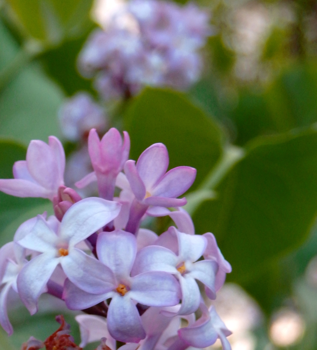 lilac and lightness