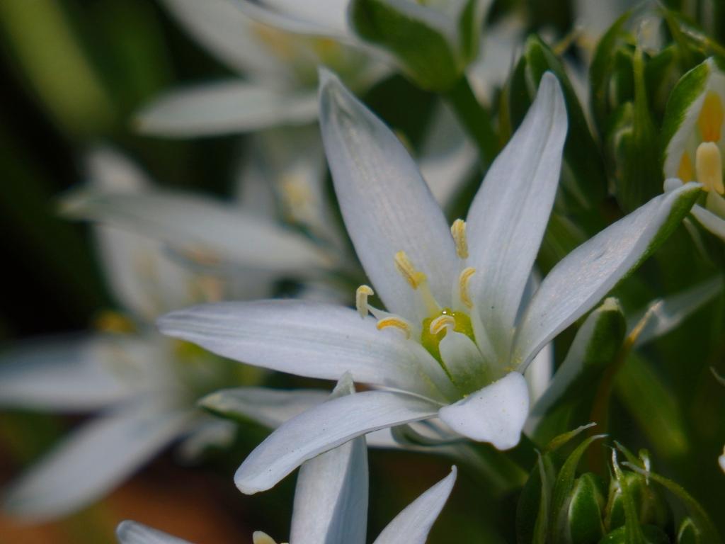 star flower glow