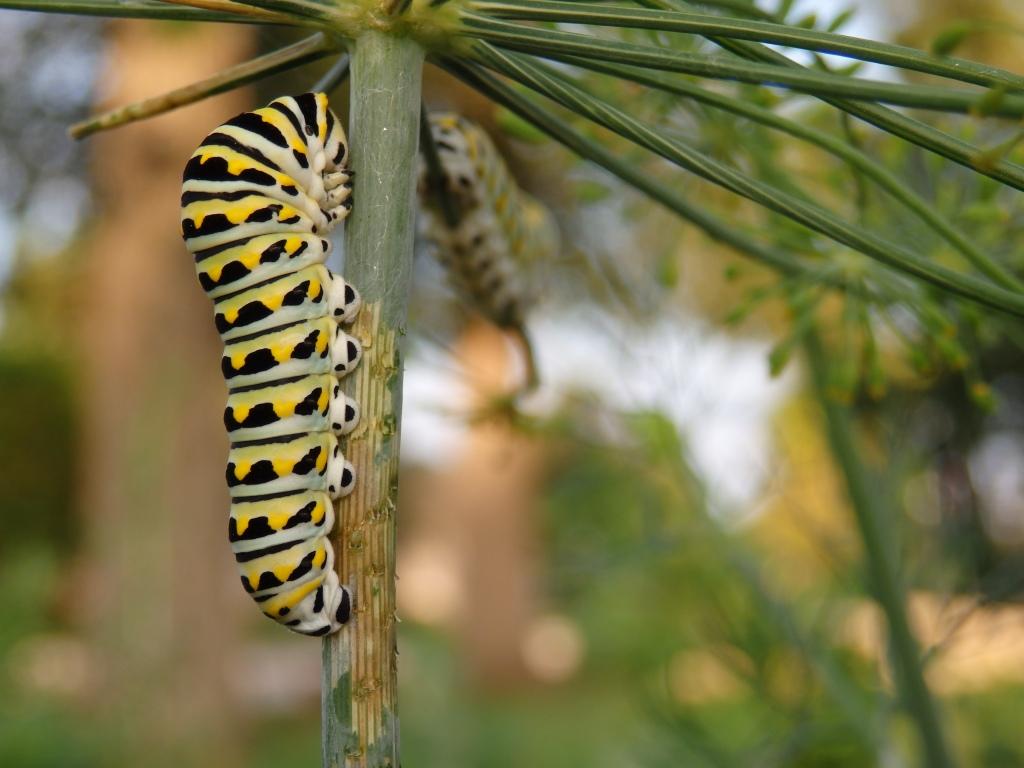 swallowtail babe mirror